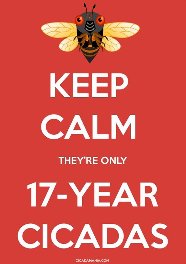 cicadas12n-1-web